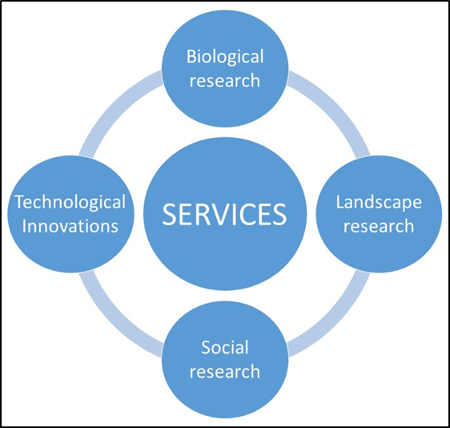 The concept of SERVICES